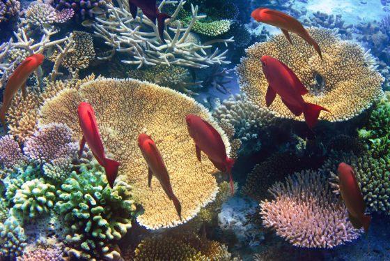 Imagen del arrecife de coral de Isla Mauricio.